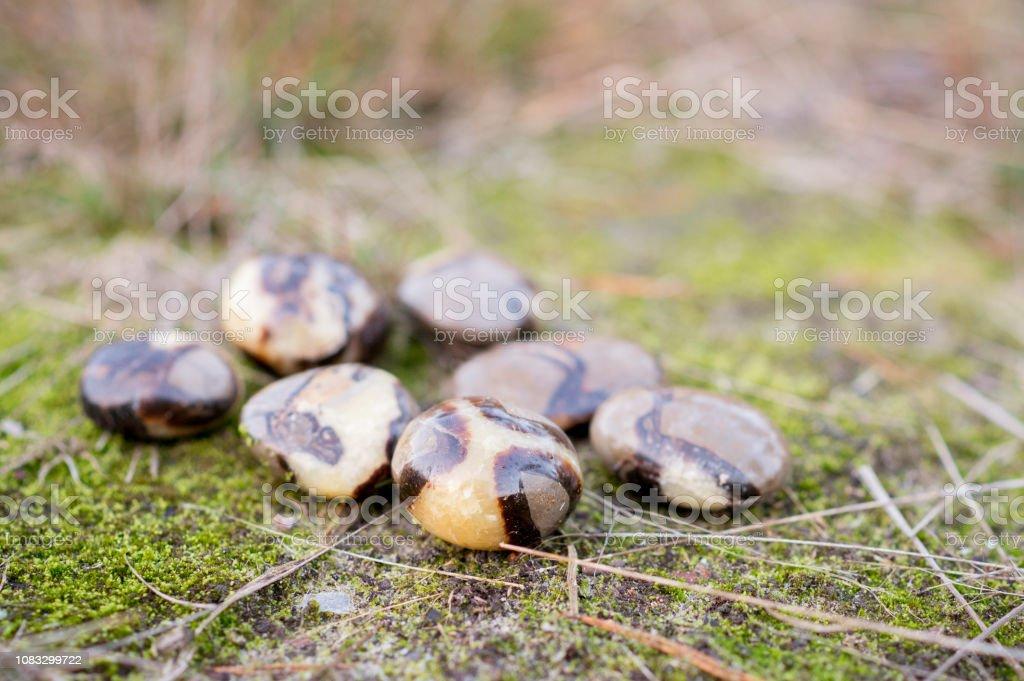 7 Septarian Steinchen, die Verlegung in den Rasen im Herbst – Foto