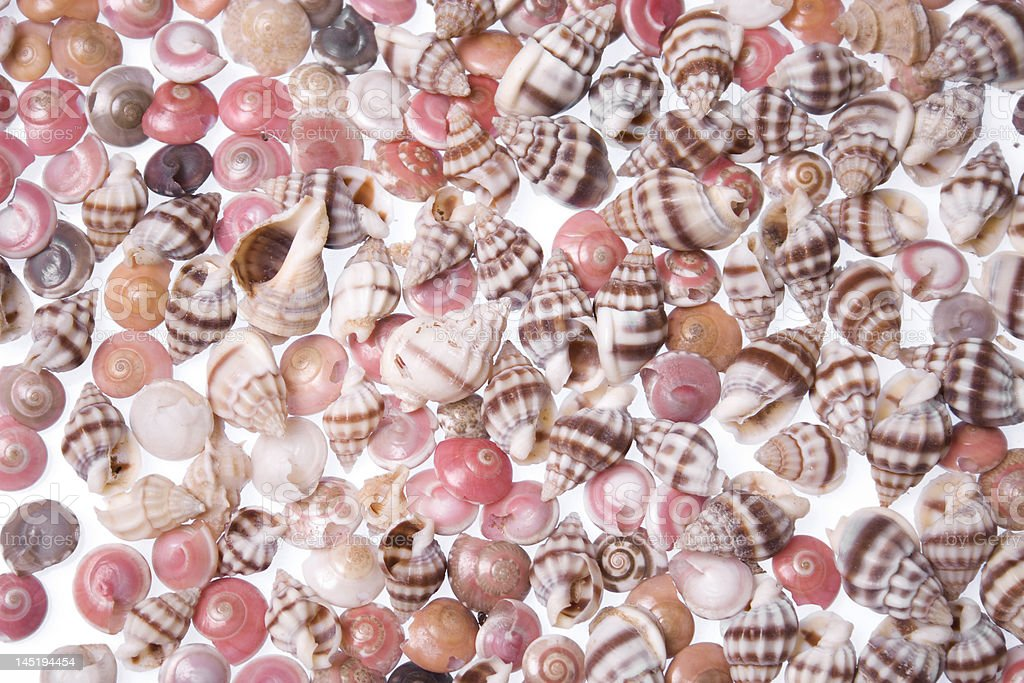 small shell background stock photo