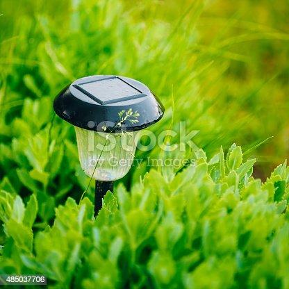 498598201 istock photo Small Solar Garden Light, Lantern In Flower Bed. Garden Design. 485037706
