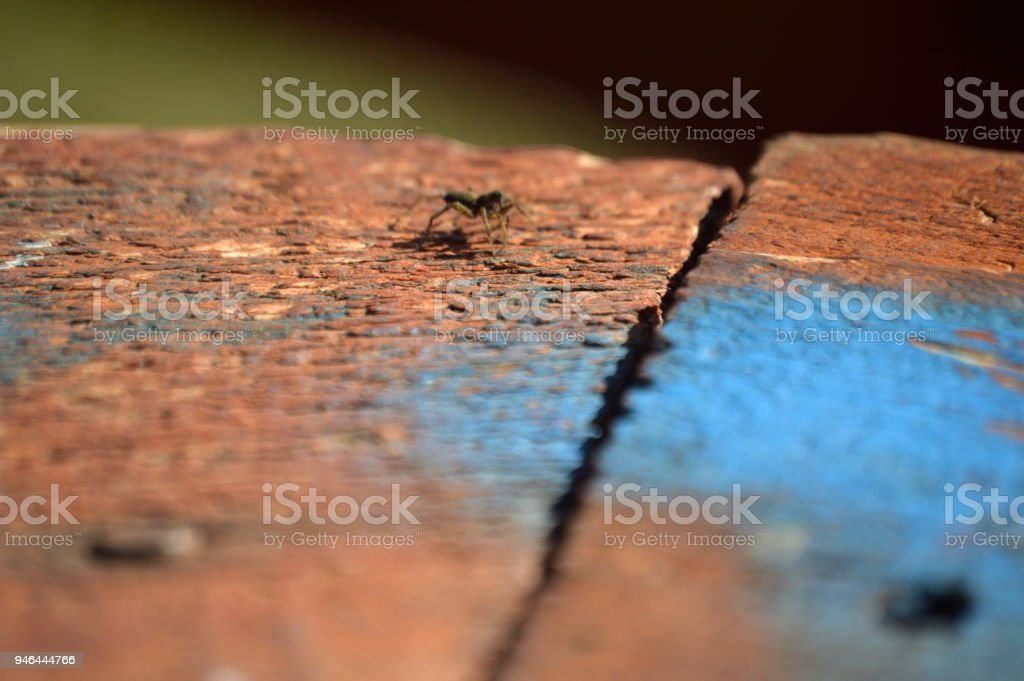small spider outdoors on a piece of old wood stock photo