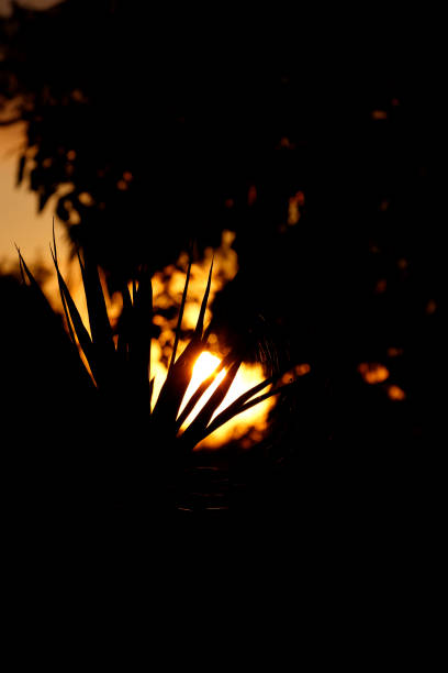Small Spider Silhouetted against Rising Sun with Sparkling Web stock photo