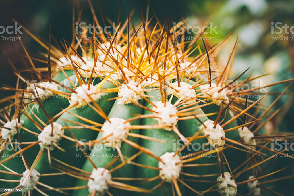 Small Spiney Cactus stock photo