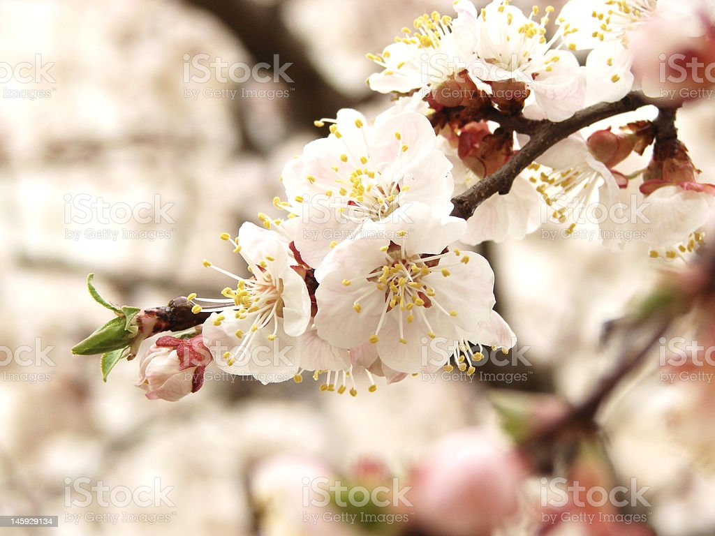 Small spring flowers at wall white stock photo