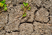 small sprout growing on cracked earth.