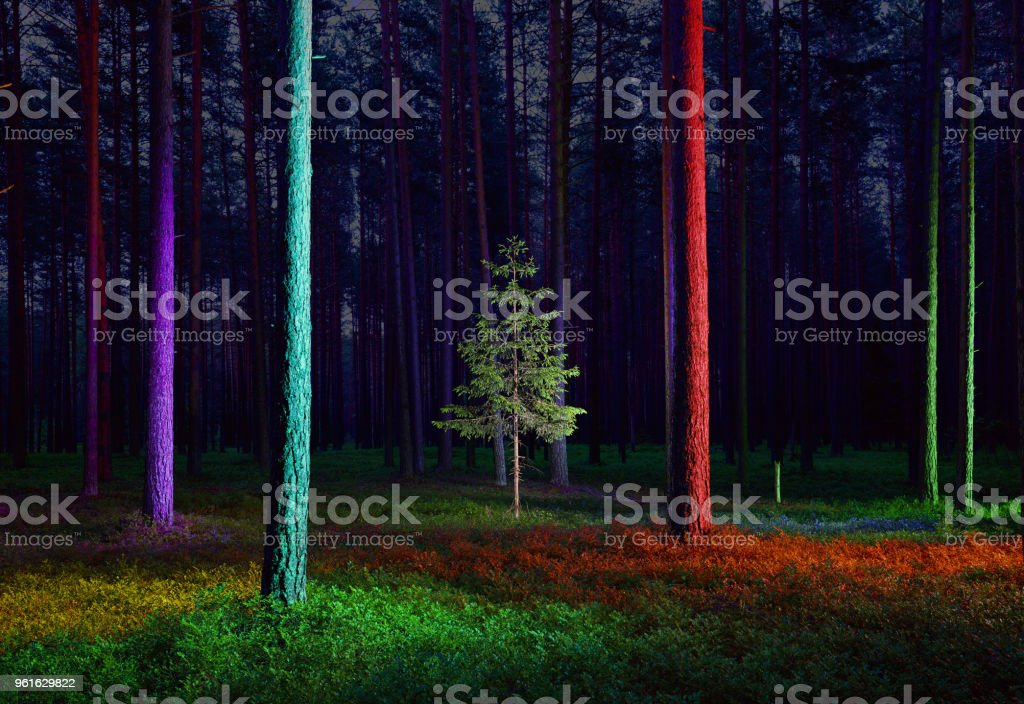 Small spruce tree in illuminated forest stock photo