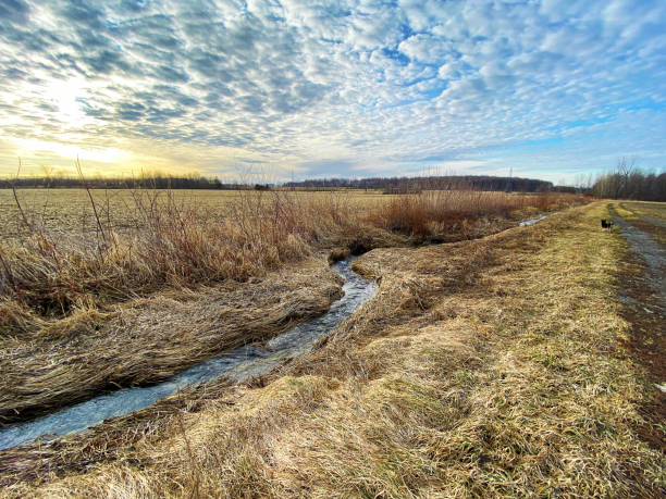 A small stream between fields. stock photo