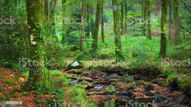 Photo of Small stream in a green deciduous forest