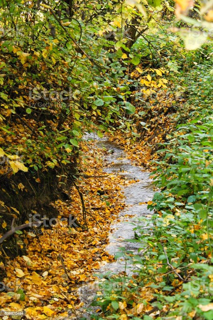 Small stream in spring nature stock photo