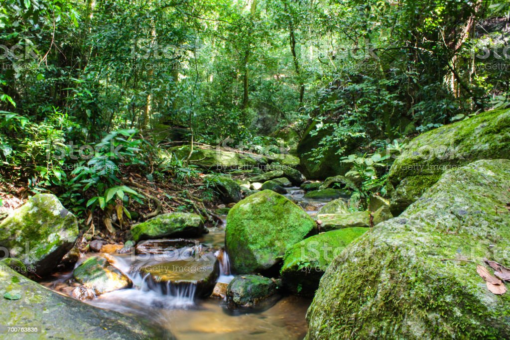 Small stream in the Atlantic forest in the middle of Rio de Janeiro, Brazil stock photo