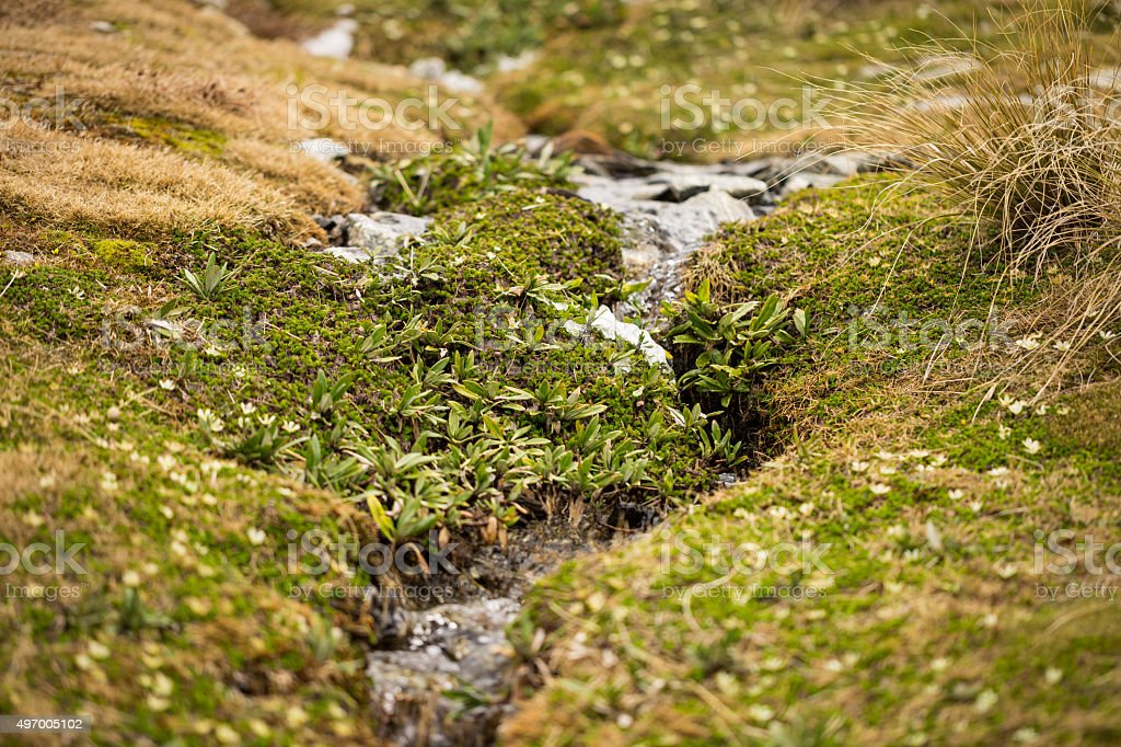 small stream with green grasses stock photo