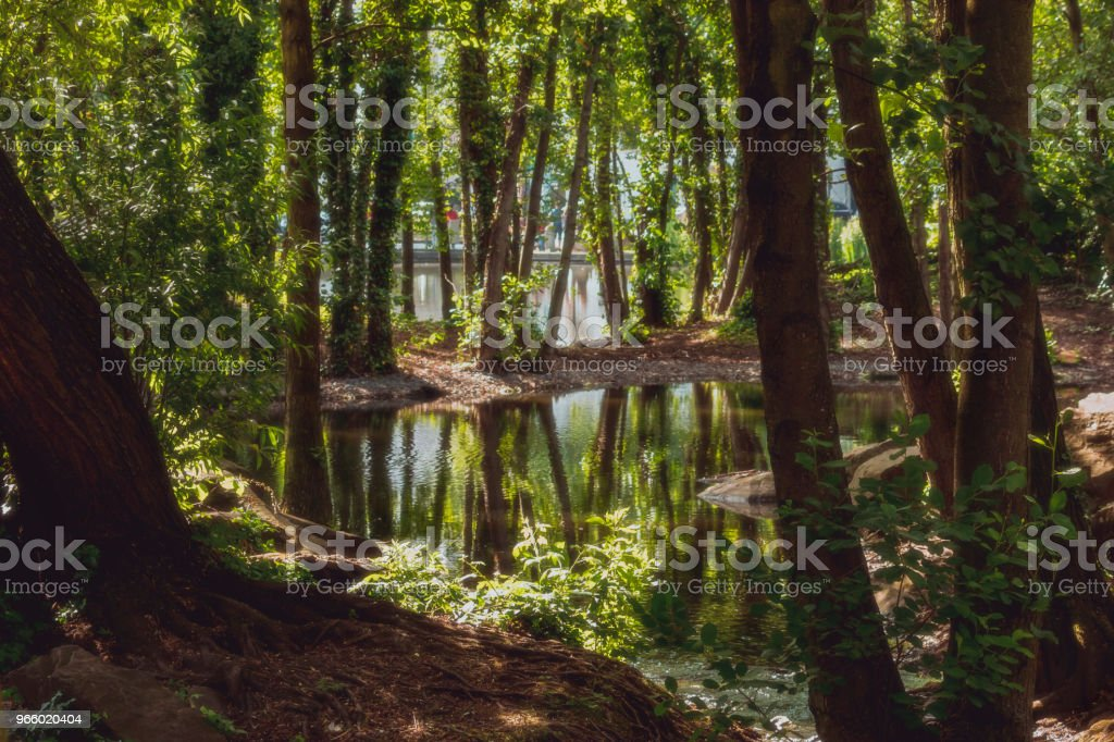 Small stream with reflection of trees in a forest - Royalty-free Environment Stock Photo
