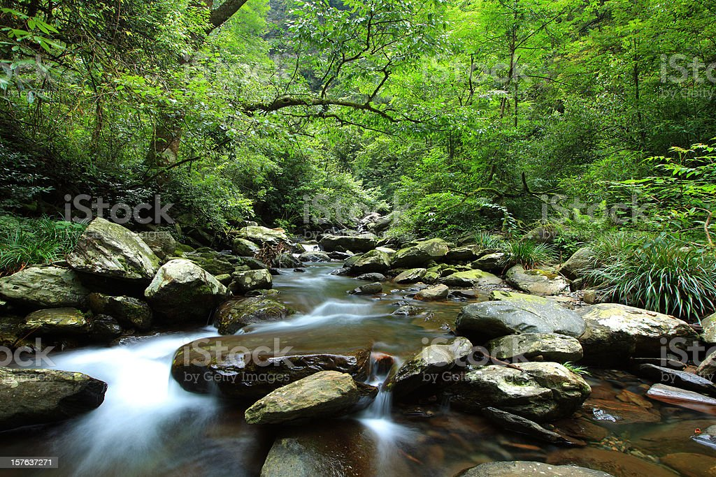 Small streams in the primeval forest royalty-free stock photo