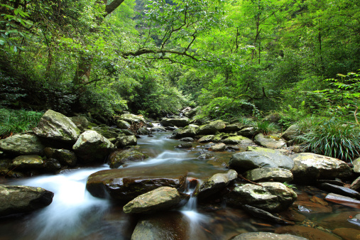 Small Streams In The Primeval Forest Stock Photo - Download Image Now