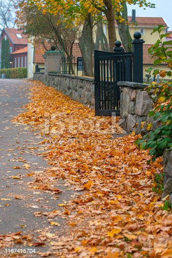 Small street covered in autumn leaves