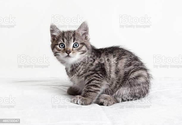 Small striped tomcat picture id465233047?b=1&k=6&m=465233047&s=612x612&h=uu5mghwl bhc5xj2u1ybajwlogxyafrnulszcy4tkmc=