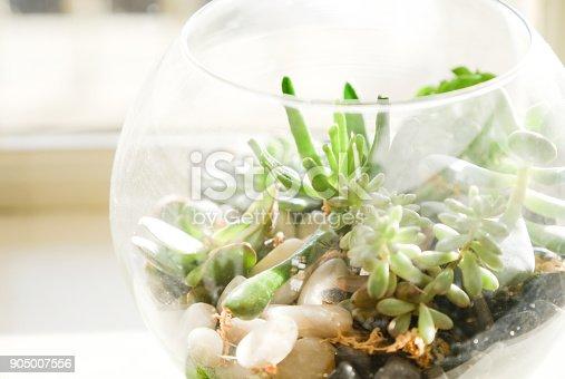 A miniature rock garden terrarium with succulent plant
