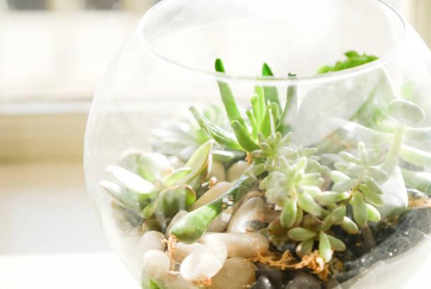 kleine sukkulenten pflanzen in einem terrarium neben dem fenster, england - terrarienpflanzen stock-fotos und bilder