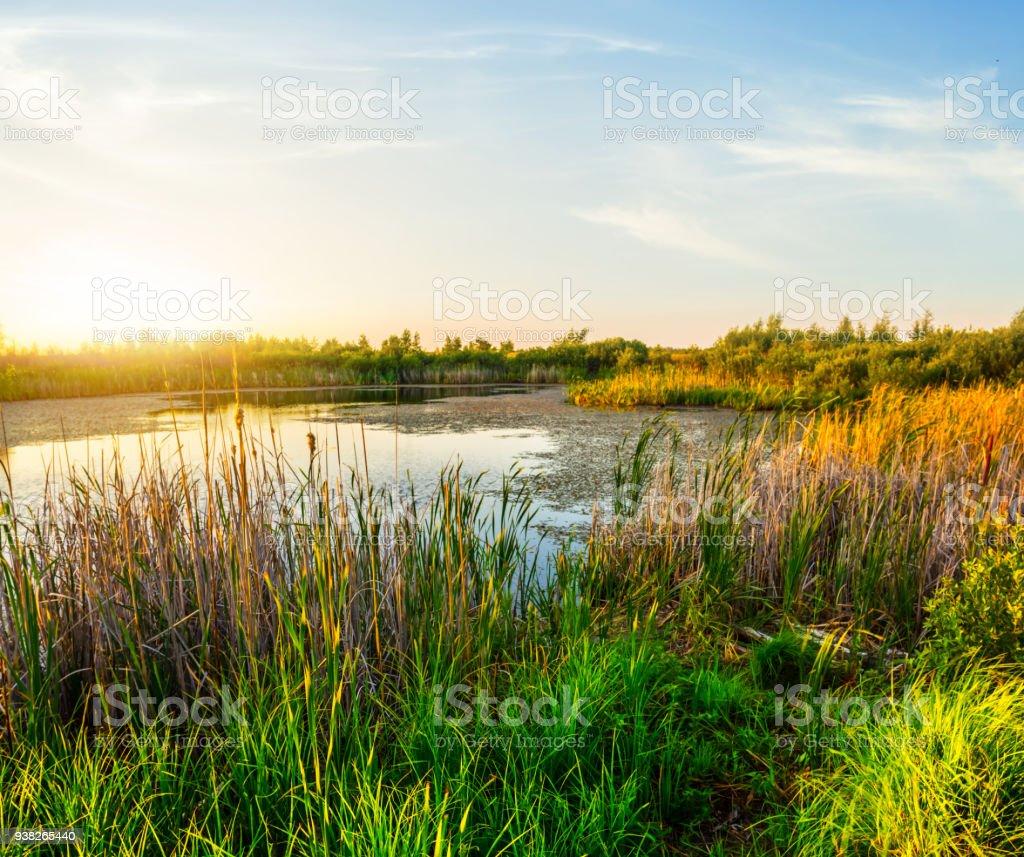 small summer lake at the sunset stock photo