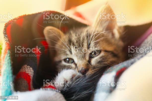 Small tabby mixed breed kitten under gray and red wool plaid pets picture id1160261819?b=1&k=6&m=1160261819&s=612x612&h=aqetixfhtqk5ay3iw8rtnurtay pvwbueubsfn01j2c=