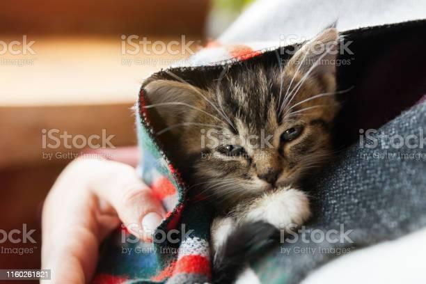 Small tabby mixed breed kitten under gray and red wool plaid pets picture id1160261821?b=1&k=6&m=1160261821&s=612x612&h=nn2jpszhvobh mefjnyctqmhlncv b9egqbmp 9eg1i=