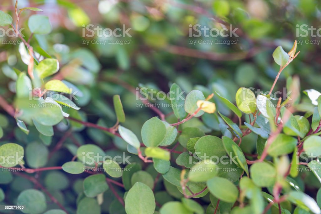 Small Tiny Leaves stock photo