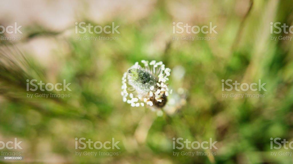 Pequeñas flores silvestres pequeñas - Foto de stock de Belleza de la naturaleza libre de derechos