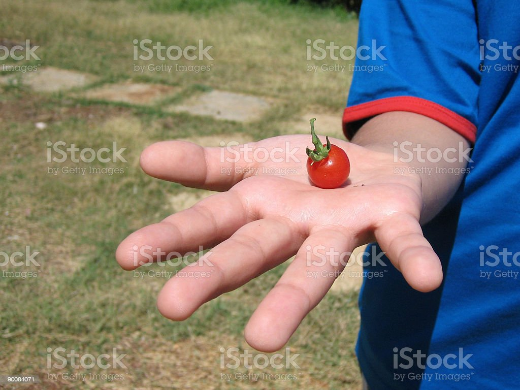 Small Tomato royalty-free stock photo