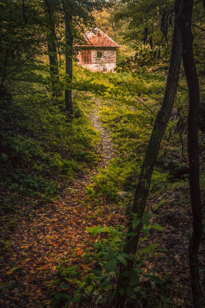 Small trail in the forest leading to a cabin in the wood during autumn season stock photo