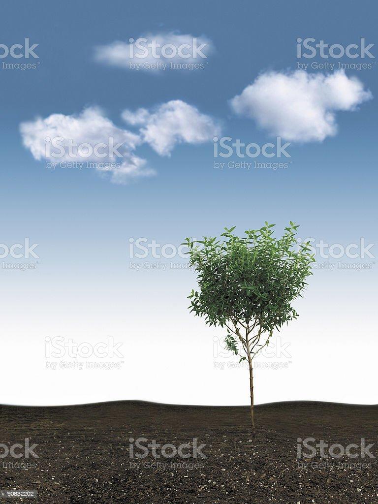small tree & blue sky royalty-free stock photo