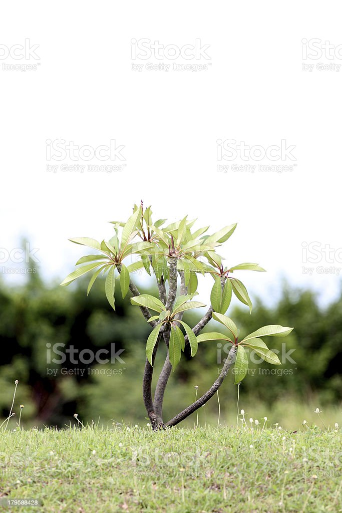 Small tree beside the road. royalty-free stock photo