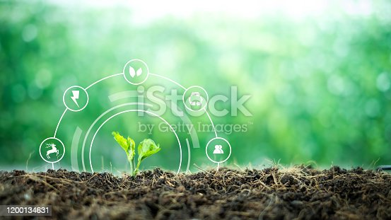 499093370 istock photo A small tree born on a ground for renewable, sustainable development over blurred green nature background.  environment concept.Ecology concept. 1200134631