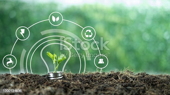 499093370 istock photo A small tree born on a light bulb with icons light bulb for renewable, sustainable development over blurred green nature background.  environment concept.Ecology concept.green energy concept energy sources sustainable Ecology Elements 1200134636