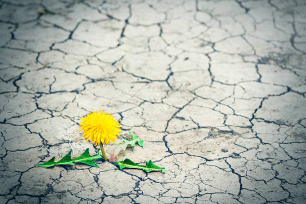 Small tree breaks through the pavement. Green sprout of a plant makes the way through a crack asphalt. Concept: don't give up no matter what, nothing is impossible. stock photo
