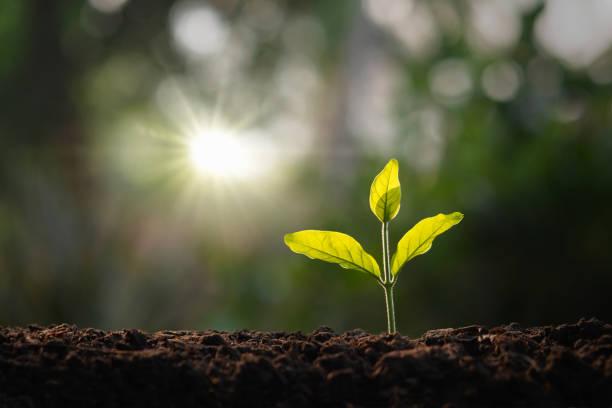 kleiner Baum wächst im Garten mit Morgenlicht. Konzept eco und ersparen Erde – Foto