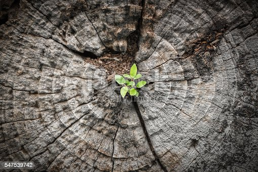 Close focus on small green tree grow from cracking area of dying wood in dark tone color