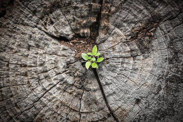 small tree grows from dying wood - boomstronk stockfoto's en -beelden
