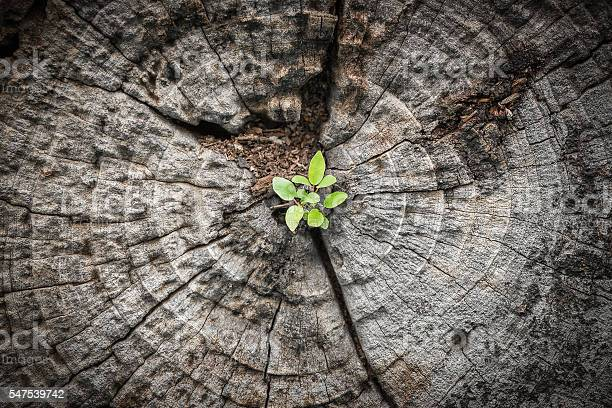 Photo of Small tree grows from dying wood