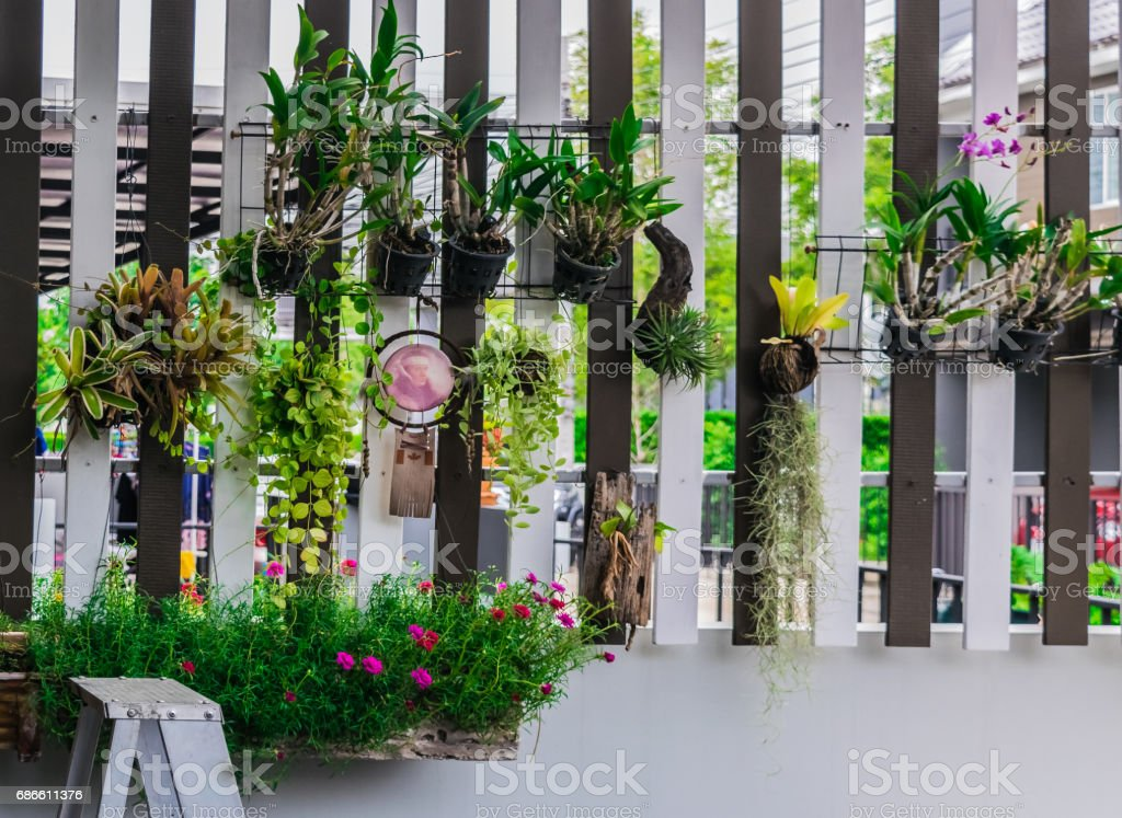 A small tree in a hanging pot royalty-free stock photo