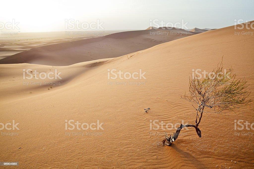 Small tree in  Sahara dunes. royalty-free stock photo