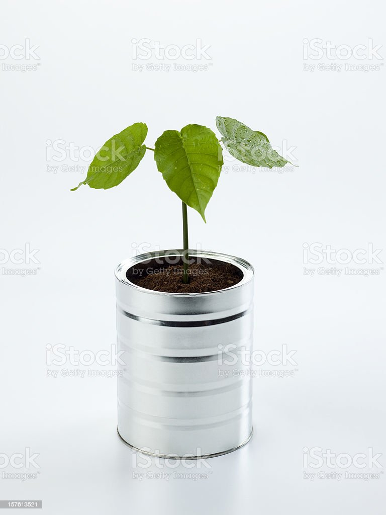 Small tree royalty-free stock photo