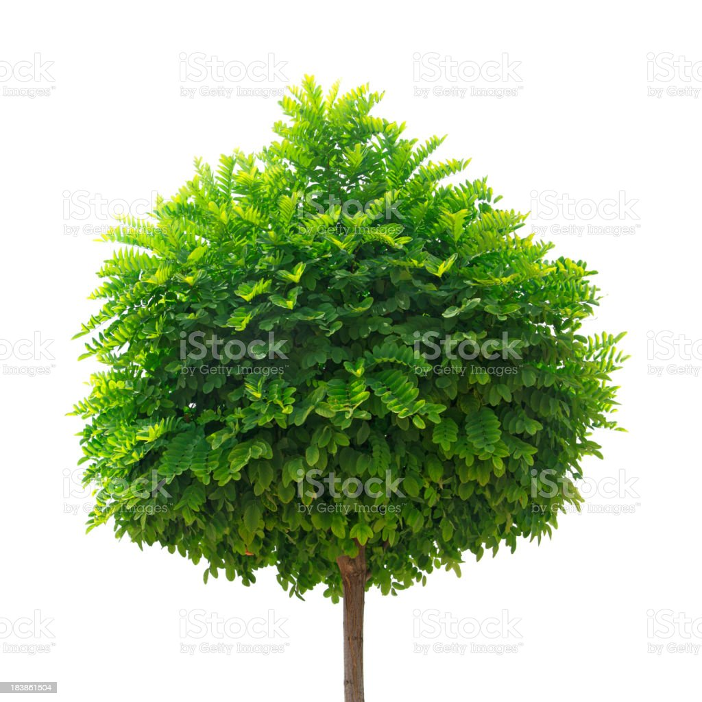 Pequeña árbol - foto de stock