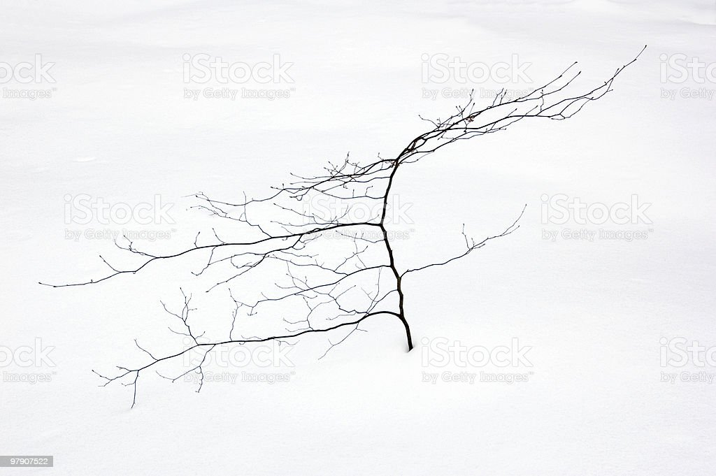 Small tree royalty-free stock photo