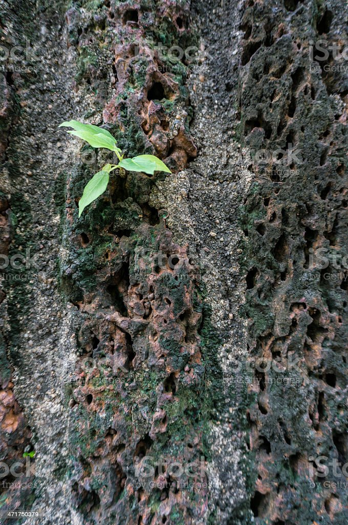 Small tree sprouting through wall royalty-free stock photo