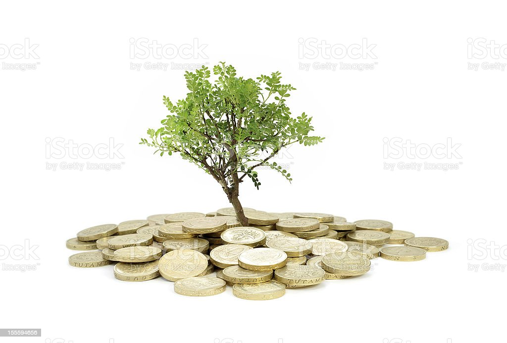 Small tree with gold coin money at the base royalty-free stock photo