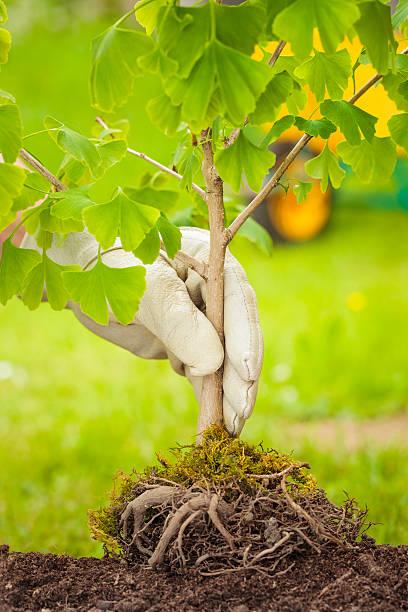 Kleiner Baum mit Wurzeln auf grünem Hintergrund – Foto