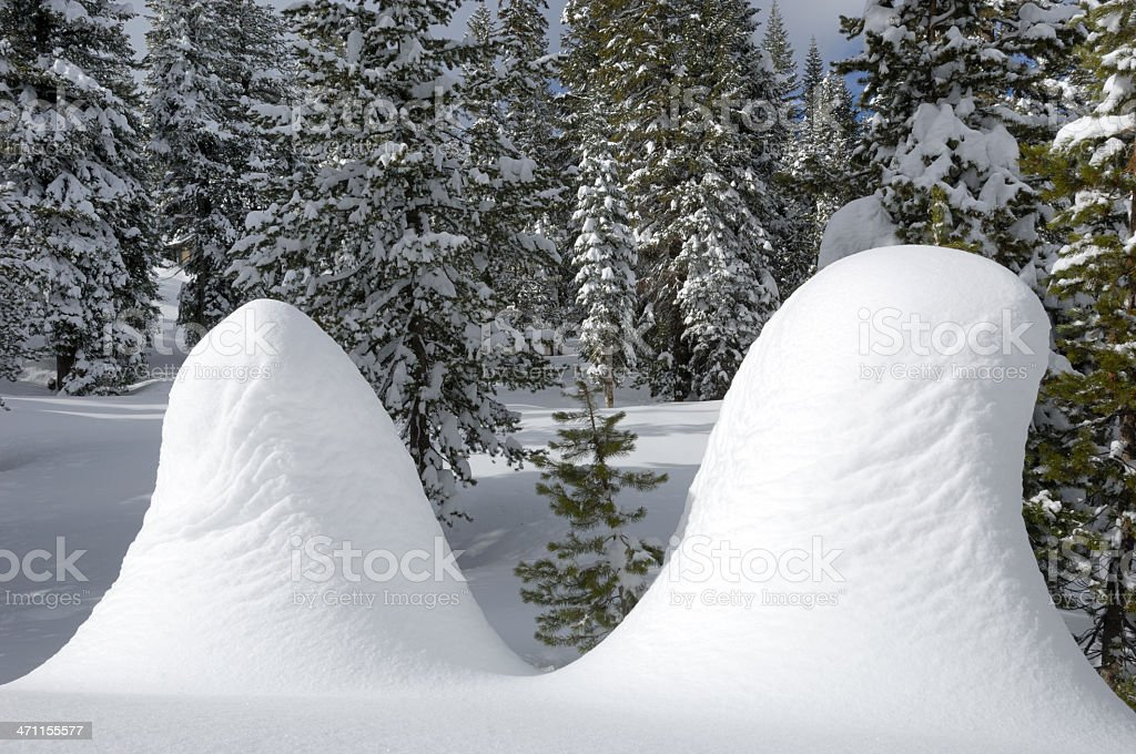 Small Trees Covered in Snow royalty-free stock photo