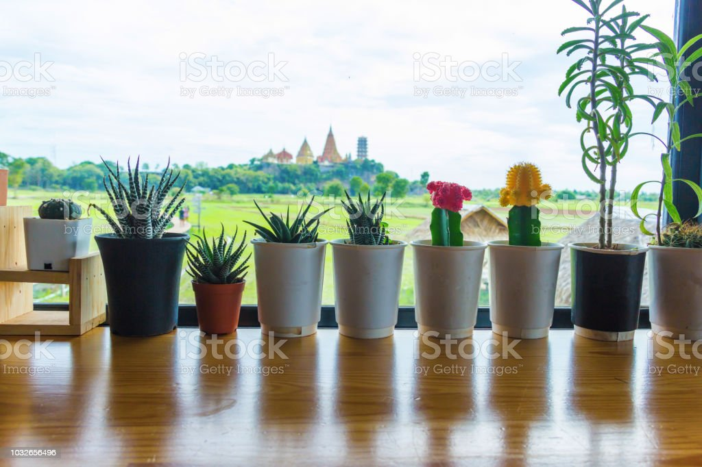 Small trees in pots placed on balcony wood in cafe stock photo