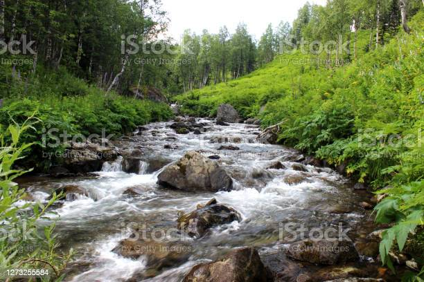 Photo of A small, turbulent river carries its waters in a rocky channel through the forest.