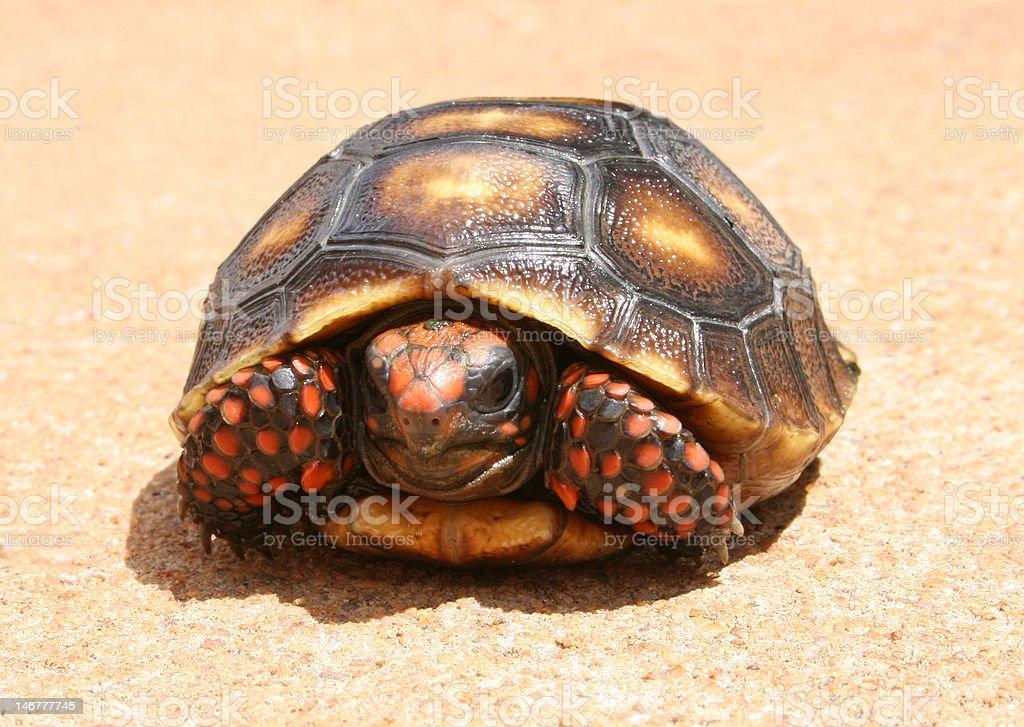 Small turtle stock photo