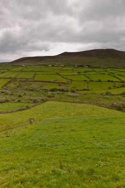 언덕, dingle 반도에 작은 골짜기 세트 - hank aaron 뉴스 사진 이미지